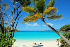 2个海滩树干 库存图片