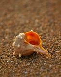 2个海滩沙子壳 库存图片
