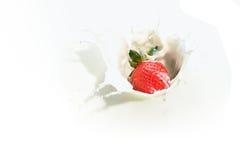 2个牛奶系列草莓 免版税库存图片