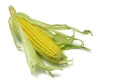 2个玉米棒玉米 库存图片