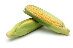 2个玉米棒玉米 免版税图库摄影