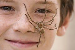 2个男孩蜘蛛 免版税库存照片