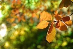 2个秋天叶子结构树 库存照片