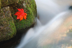 2个秋天流 图库摄影