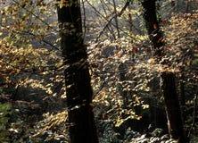 2个秋天狂文 库存照片