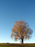 2个秋天结构树 免版税库存照片