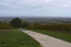 2个科涅克白兰地法国葡萄园 库存照片