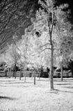 2个红外结构树 库存照片