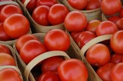 2个红色蕃茄 库存图片