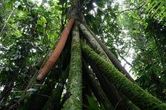 2个结构树走 图库摄影