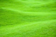 2个绿色牧场地 免版税库存图片