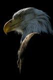 2个美国人老鹰 免版税库存照片