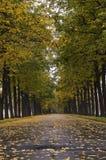 2个胡同秋季菩提树 库存照片