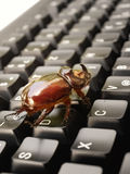 2个臭虫计算机 库存图片