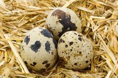 2个蛋鹌鹑 免版税库存照片