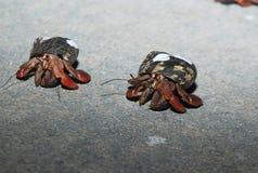 2个螃蟹赛跑 库存图片