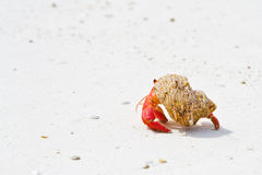 2个螃蟹隐士 库存图片