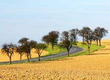 2个路结构树 免版税库存照片