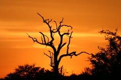 2个非洲人日落 免版税图库摄影