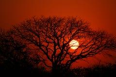 2个非洲人日落 图库摄影