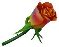 2个颜色玫瑰色婚礼 免版税库存图片
