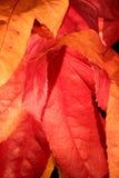 2个颜色秋天 库存图片