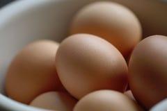 2个鸡蛋 库存图片