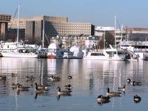 2个dc横向sw都市华盛顿江边 免版税库存照片