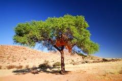 2偏僻的结构树 免版税库存图片