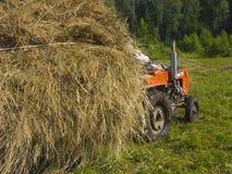 2割晒牧草西伯利亚 免版税图库摄影