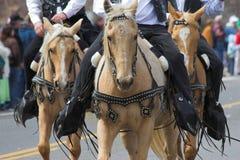 2匹牛仔马 免版税库存照片
