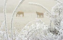 2匹马冬天 免版税库存图片