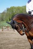 2匹马车手 库存图片