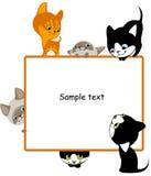 2只不同小猫安置您的文本 库存图片