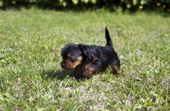 2只小狗 免版税库存照片