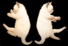 2只小猫休眠 免版税库存照片
