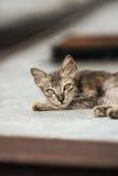 2只小猫迷路者 免版税库存照片