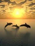 2只海豚日落黄色 免版税库存照片