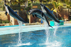 2只海豚飞行 免版税库存图片