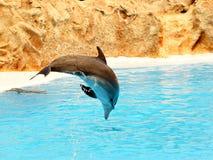 2只海豚飞跃 库存照片
