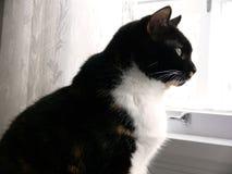 2只猫厨房 图库摄影