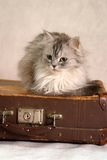 2只猫手提箱 库存图片