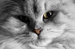 2只猫纵向 免版税图库摄影