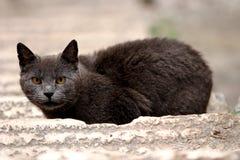 2只猫街道 库存图片