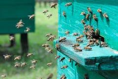 2只蜂飞行 免版税库存照片