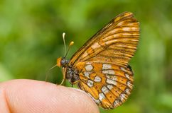 2只蝴蝶手指 图库摄影