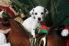 2只达尔马提亚狗小狗s圣诞老人雪橇 库存照片