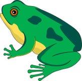 2只青蛙生存期 库存例证