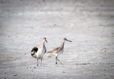 2只鸟争论 免版税库存图片