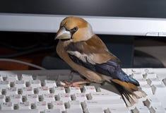 2只鸟关键董事会 免版税库存照片